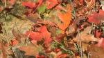Beginnender Herbst, copyright Yvonne Hrdy